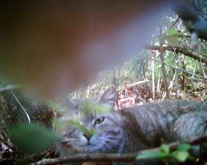CatCam - cat photographer get picture of another cat