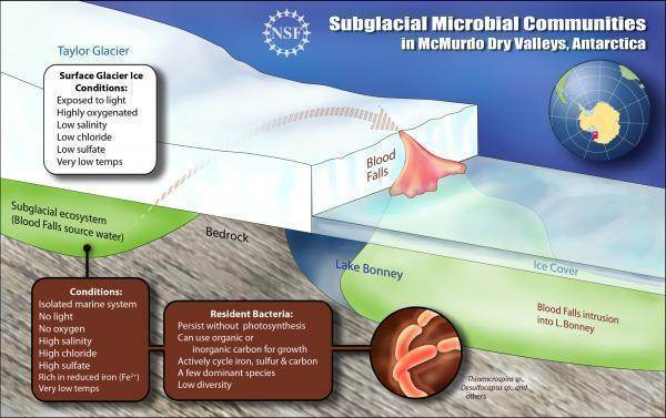 Graphic showing environment of Antarctic subglacial microbes