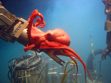 octopus in the brine lake