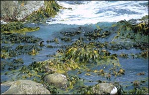 photo of seaweed - algae