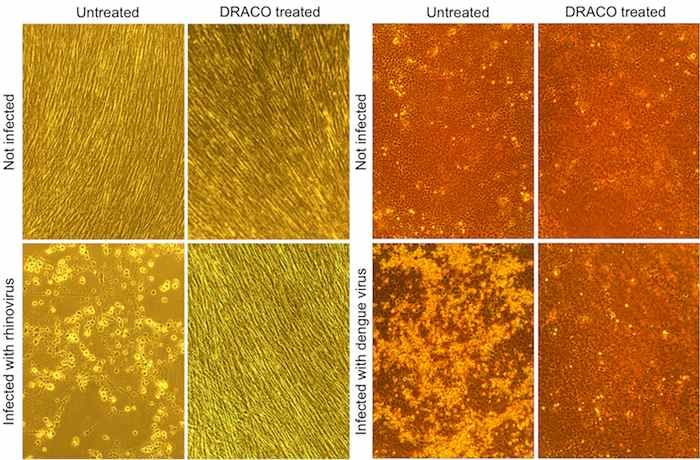 image showing the results of cultures treated with DRACO v. those not treated