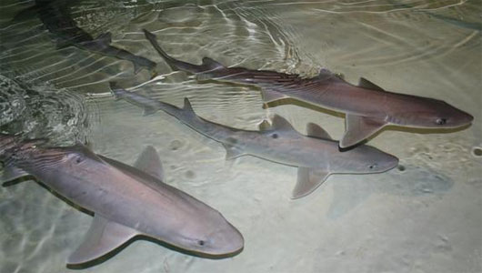 photo of 3 dogfish sharks