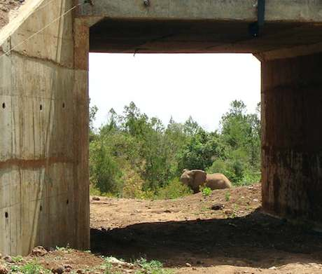 photo of elephant preparing to walk under a highway