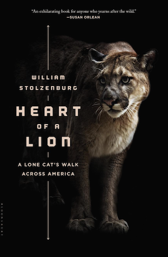 book cover with image of a mountain lion